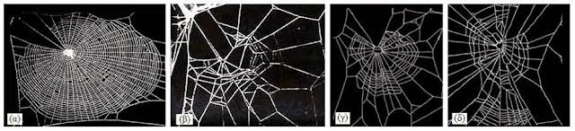 Μορφές ιστού αράχνης, υπό την επίδραση ψυχοτρόπων ουσιών.