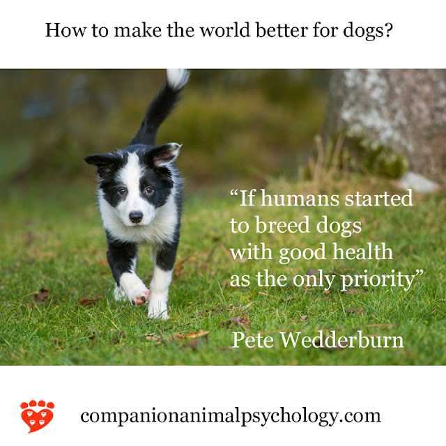 Dr. Pete Wedderburn on breeding dogs for good health