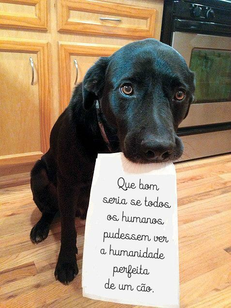 ...humanidade perfeita...