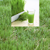 Know on How to Make Bermuda Grass Juice and the Surprising Effect On Health