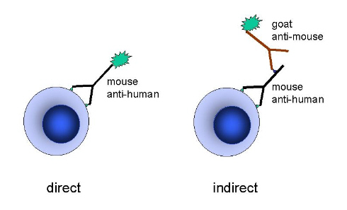 Technique D Immunofluorescence Directe Immunofluorescence
