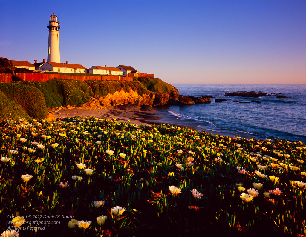 a photo of the pigeon point lighthouse in california with spring wildflowers