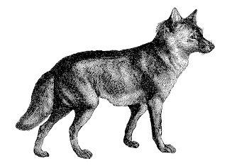 wolf image antique illustration drawing artwork digital download