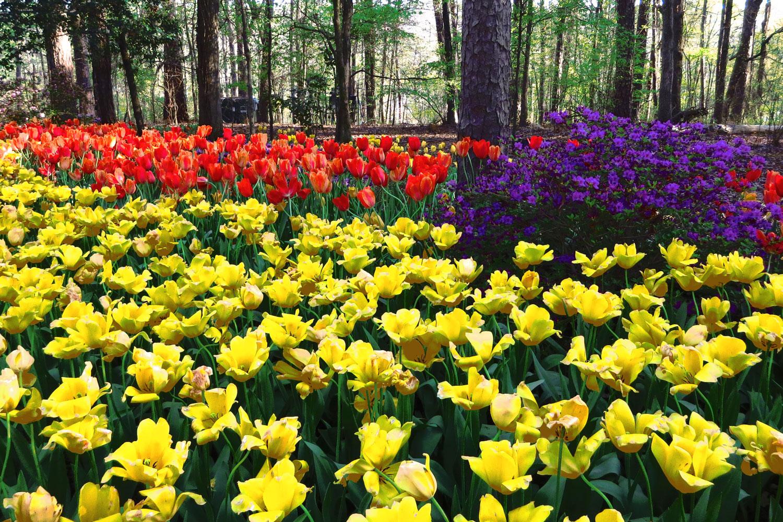 An Arkies Musings Easter At Garvan Woodland Gardens