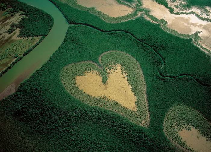 Natural formation of a mangrove forest in New Caledonia
