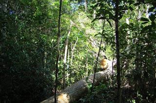 http://vnoticia.com.br/noticia/1555-sfi-realiza-semana-do-meio-ambiente-entre-os-dias-02-e-05-de-junho