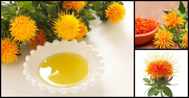 Protect The Heart, Lose Extra Weight, And Improve Blood Sugar Levels With Safflower Oil