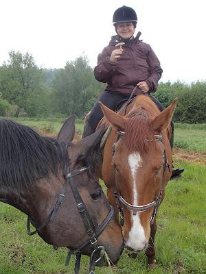 konie, jazda konna, jazda w terenie, grzyby wiosenne, grzyby w maju, majowe grzyby, grzybobranie na koniu, żółciak siarkowy Laetiporus sulphureus, pierścieniak uprawny Stropharia rugosoannulata