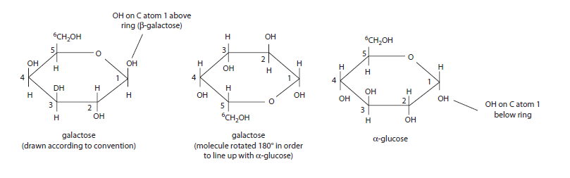 what is the relationship between glycosidic bond formation and hydrolysis
