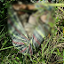 Corpo de mulher é encontrado com mãos e pés amarrados em matagal de Garanhuns