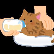 哺乳瓶でミルクを飲む子猫のイラスト(うつ伏せ)