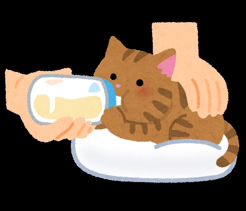 哺乳瓶でミルクを飲む子猫のイラストうつ伏せ かわいいフリー素材