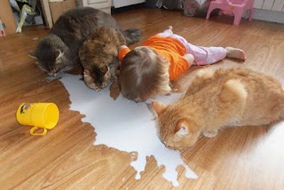 3 cats and toddler drinking spilt milk