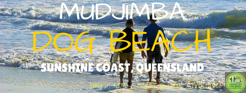 MUDJIMBA DOG BEACH, SUNSHINE COAST. QUEENSLAND