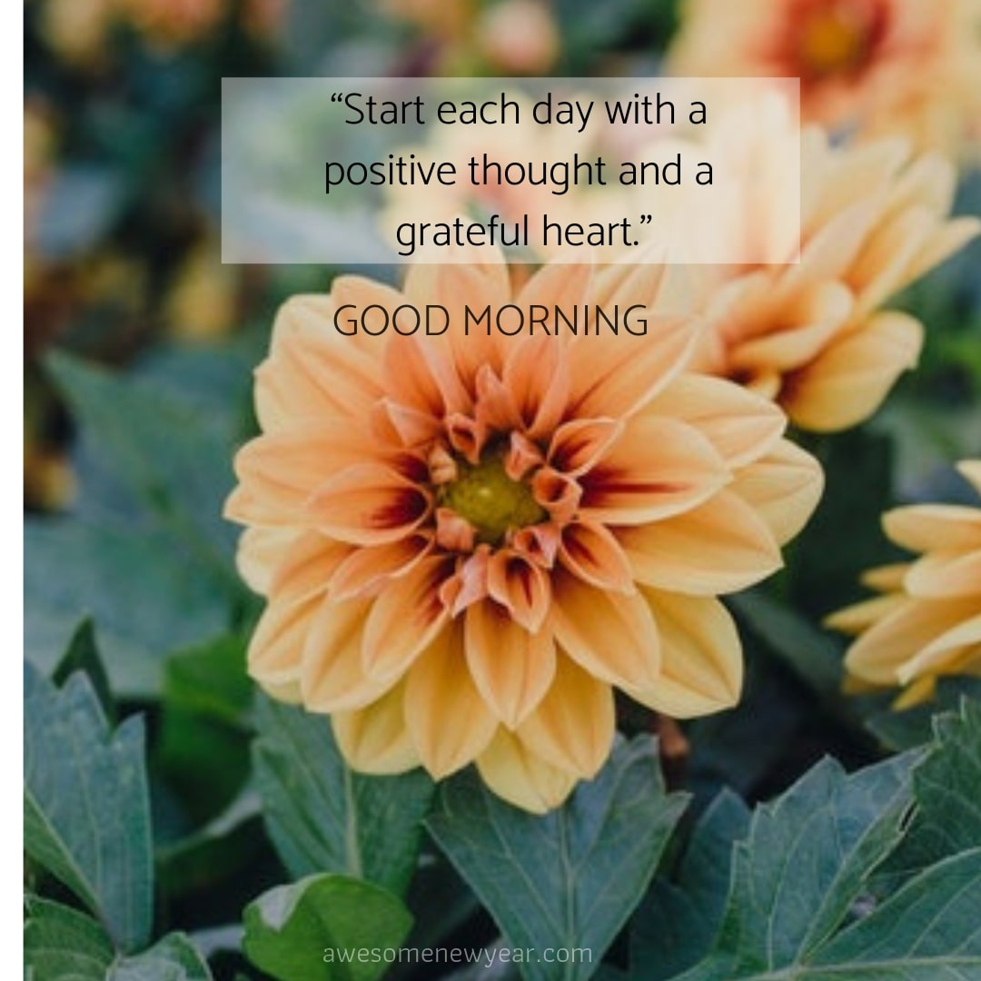 15 Positive Good Morning Thoughts With Beautiful Flowers Images