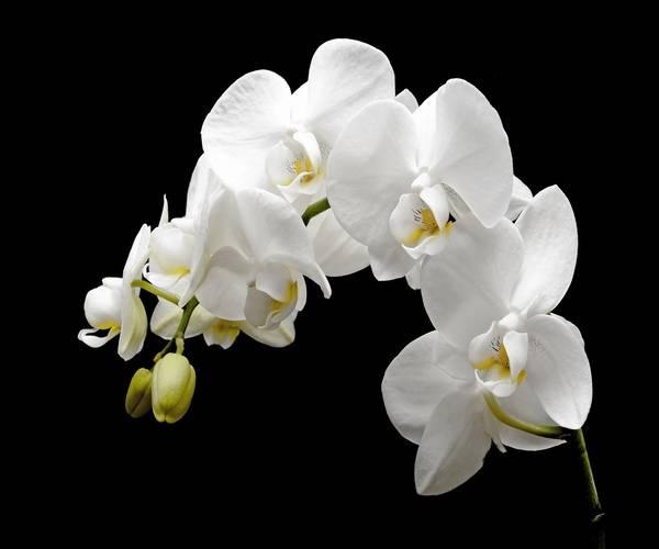 https://www.bioorbis.org/2019/01/orquideas-cultivo-plantar.html