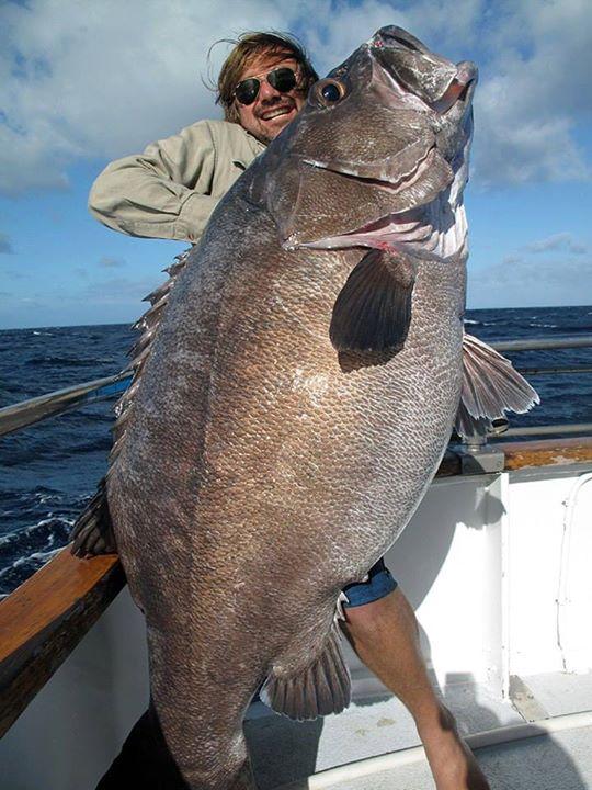 bigfisch
