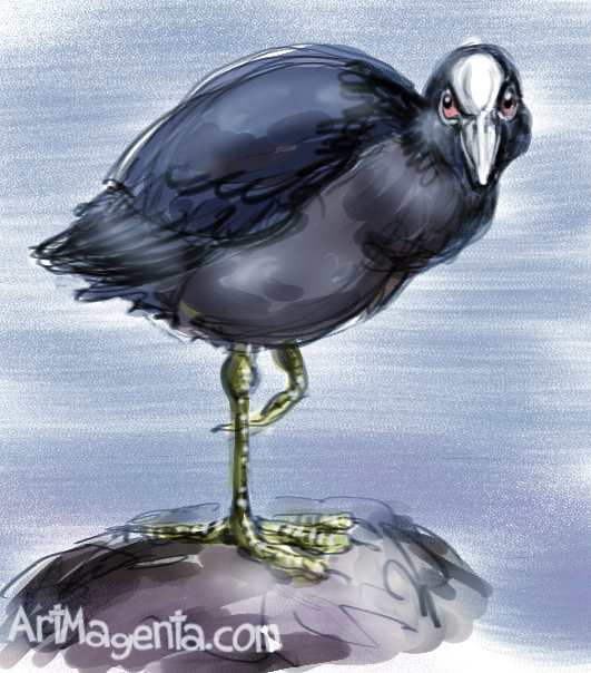 Coot sketch painting. Bird art drawing by illustrator Artmagenta