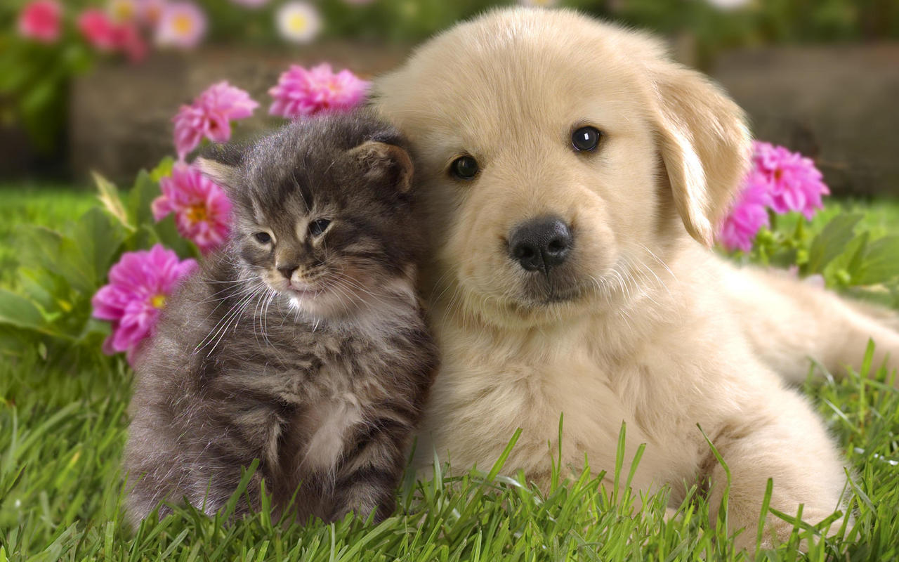 Dog and Cat Wallpaper teddybear64 16834786 1280 800