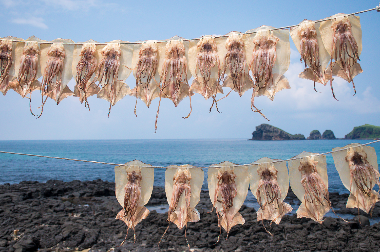 drying squid in korea Olle trail jeju korea