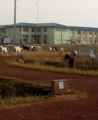 Herdsmen & Their Cattles Storm Plateau State University (Photos)