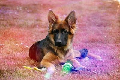 frases para perros, imagenes de perritos animados, imagenes de perritos bebes, imagenes perros, imagenes perros