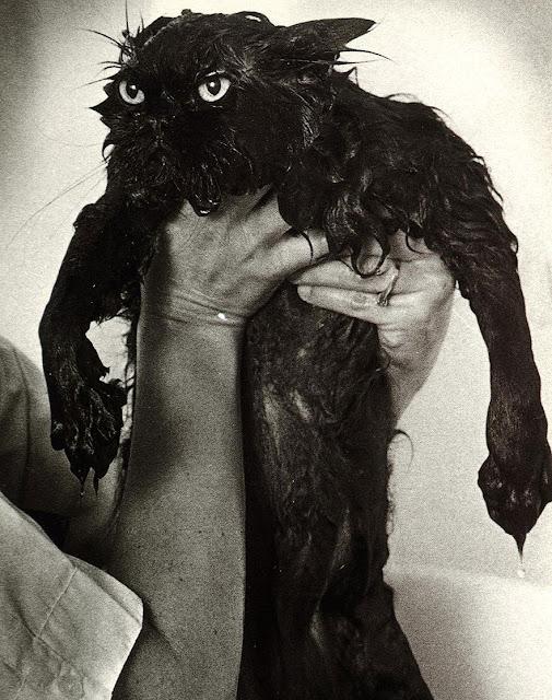 fotos muy divertidas de gatos mojados