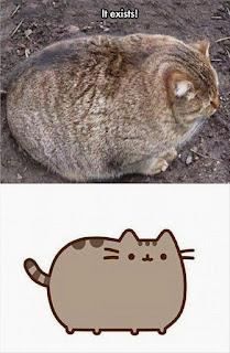 Fat Funny Cat