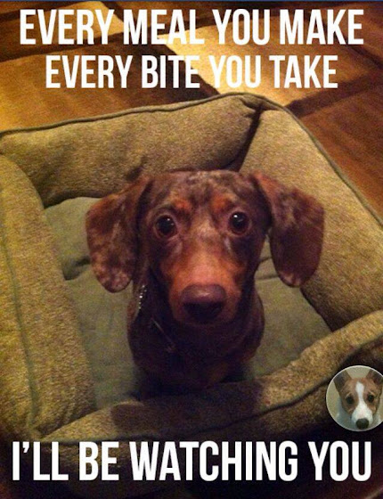 Doxie's Creed