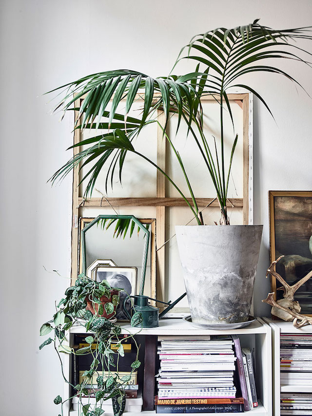 housplants, bookshelf, bohemian home, books