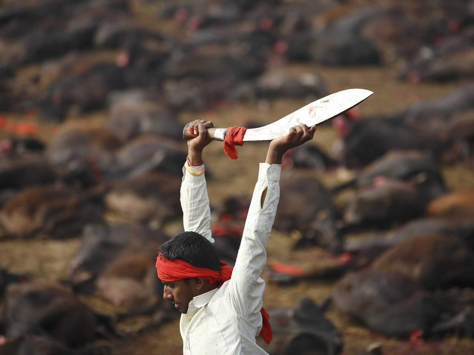 Animal sacrifice is illegal. The act of animal sacrifices is covered under Local Municipal Corporation Acts, Prevention of Cruelty to Animals Act, 1960, Wildlife (Protection) Act, 1972, Indian Penal Code (IPC) lawescort