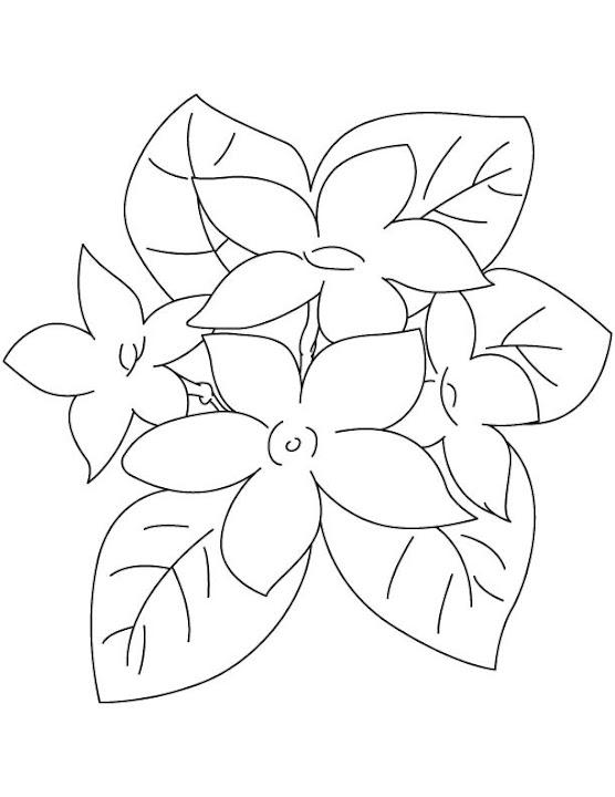 Gambar Mewarnai Bunga Melati Sketsa Bunga Matahari Auto Insurance