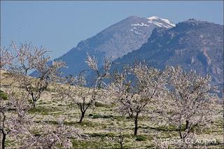 http://agriculturers.com/el-almendro-se-convierte-en-uno-de-los-cultivos-con-mayor-futuro/