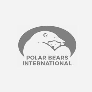 Polar-Bears-International.png