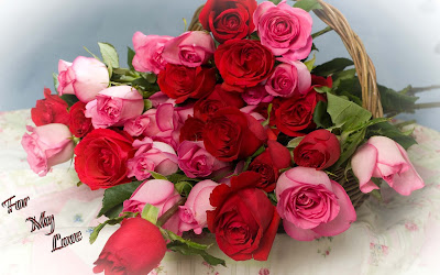 pink-and-red-roses-nice-booke-for-my-love