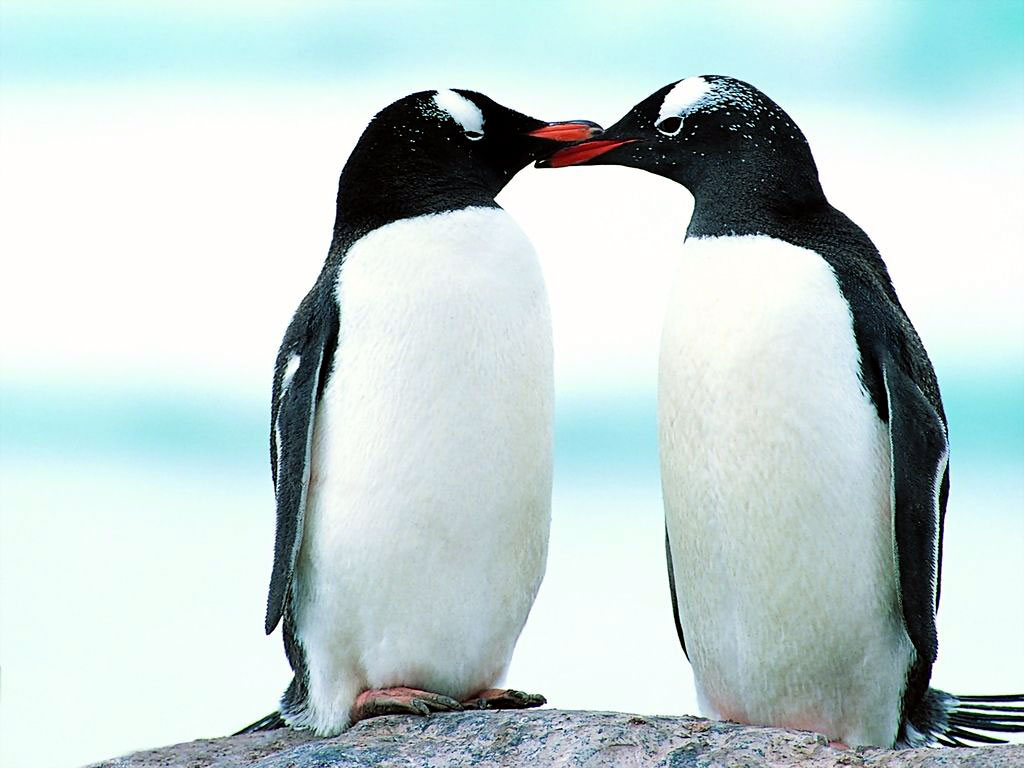 Aninimal Book: Lovely Wallpapers: Penguin Birds Cute Wallpapers