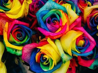 Merangkai Bunga Mawar Pelangi