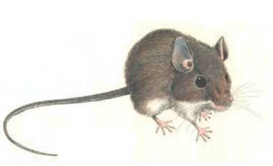 Green Risks: Hantavirus-Clean Up and Mouse Proof the House