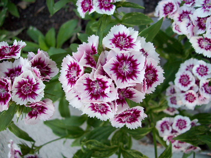 doğadan çiçek resimleri