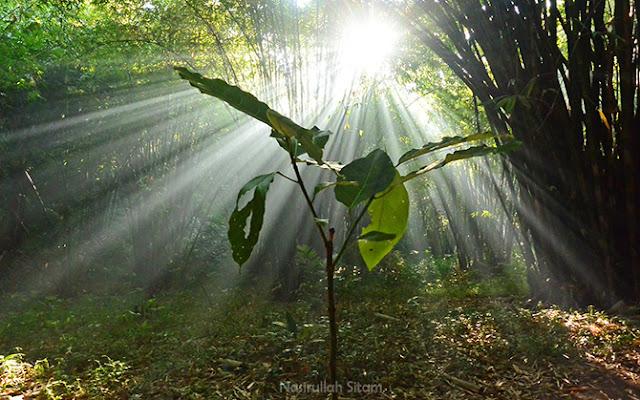 Keindahan pagi, cahaya mentari yang berpendar