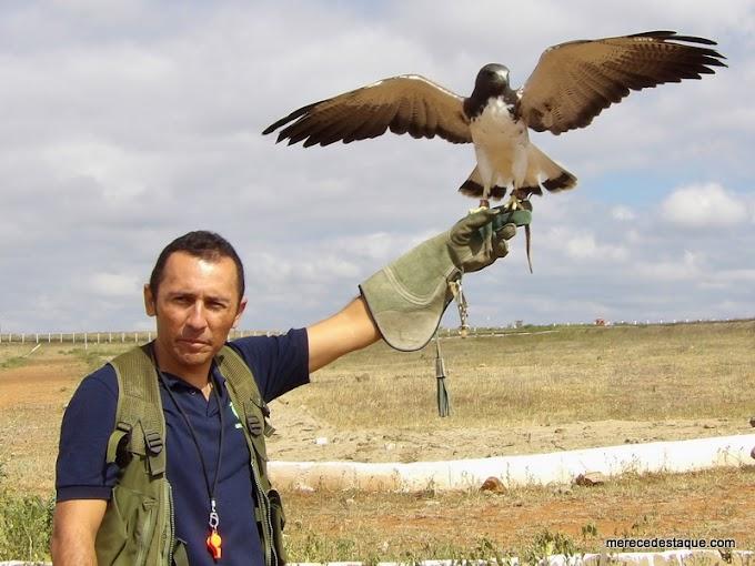 Apresentações com aves de rapina serão realizadas em Santa Cruz do Capibaribe