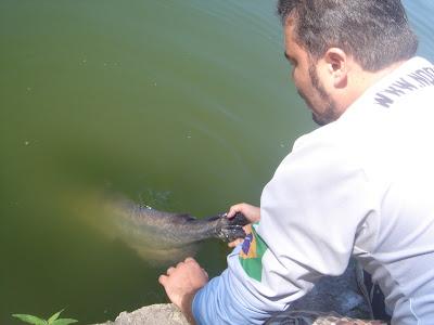 Pesque e Solte, Peixes, Pescaria , Nó de Pesca
