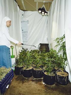 monja mariguana
