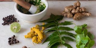 Herbal Untuk Penis Keluar Nanah