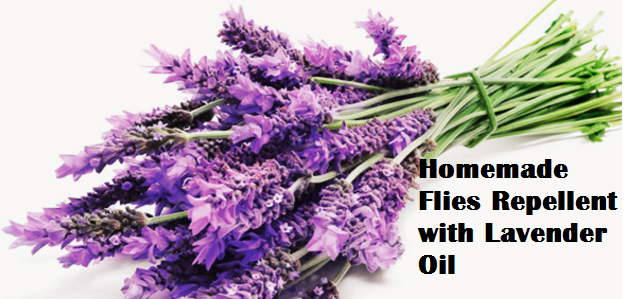 Homemade Flies Repellent with Lavender Oil
