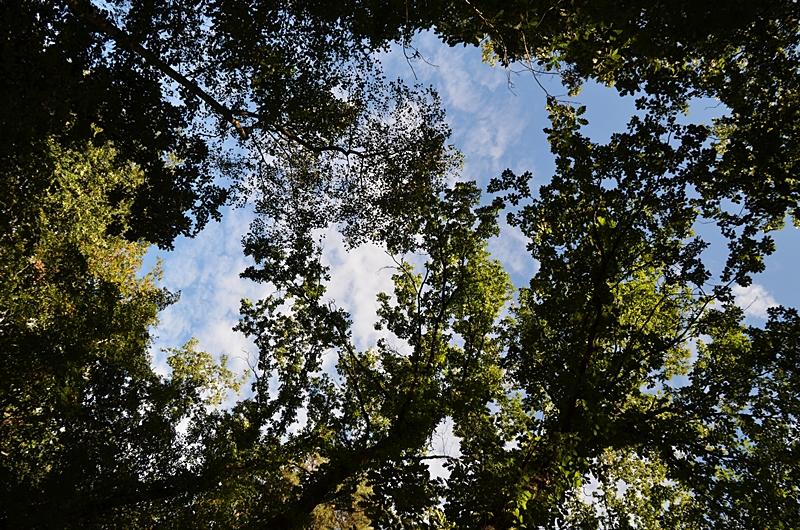 nature foret arbres ciel poesie reve espace
