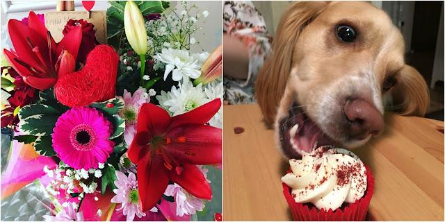 Valentines flowers, Spaniel puppy