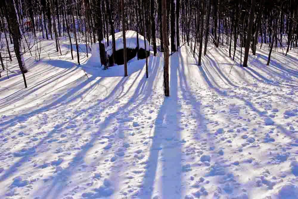 A Shadow on the Snow