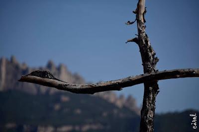 Bosc de les Creus edat mitjana vacarisses