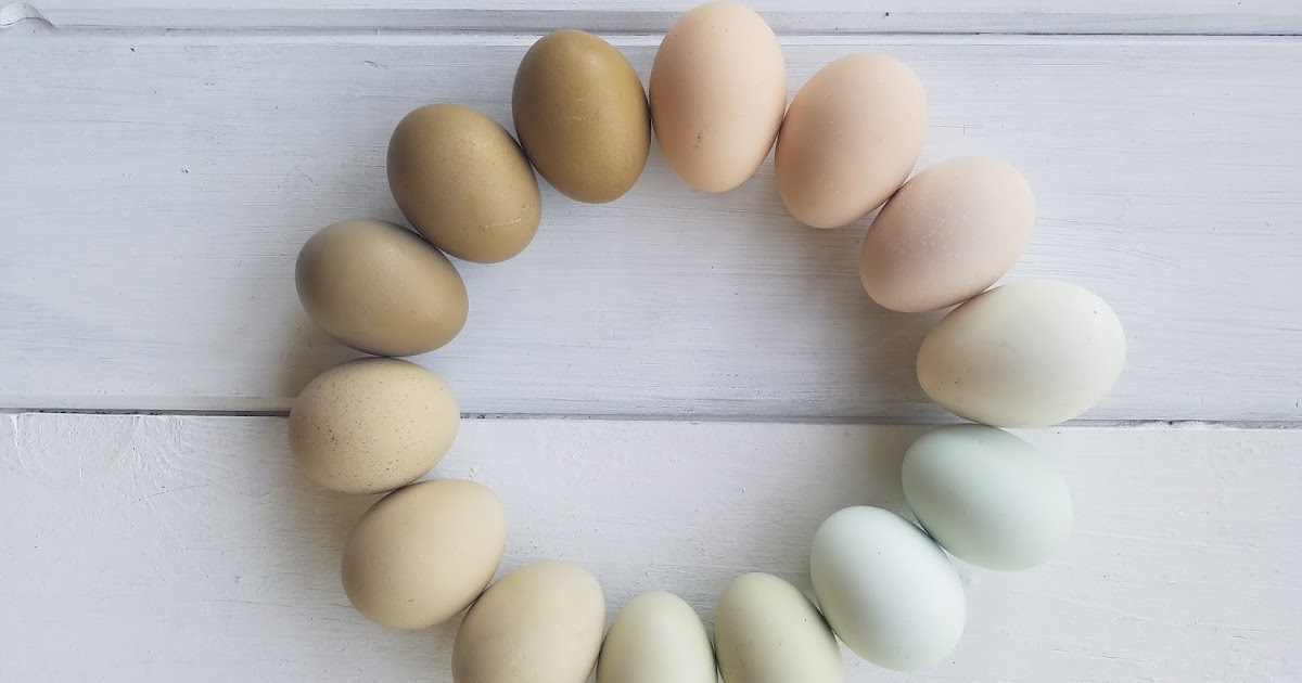 A Rainbow Of Egg Colors What Breed Of Chicken Lays Which Color Egg